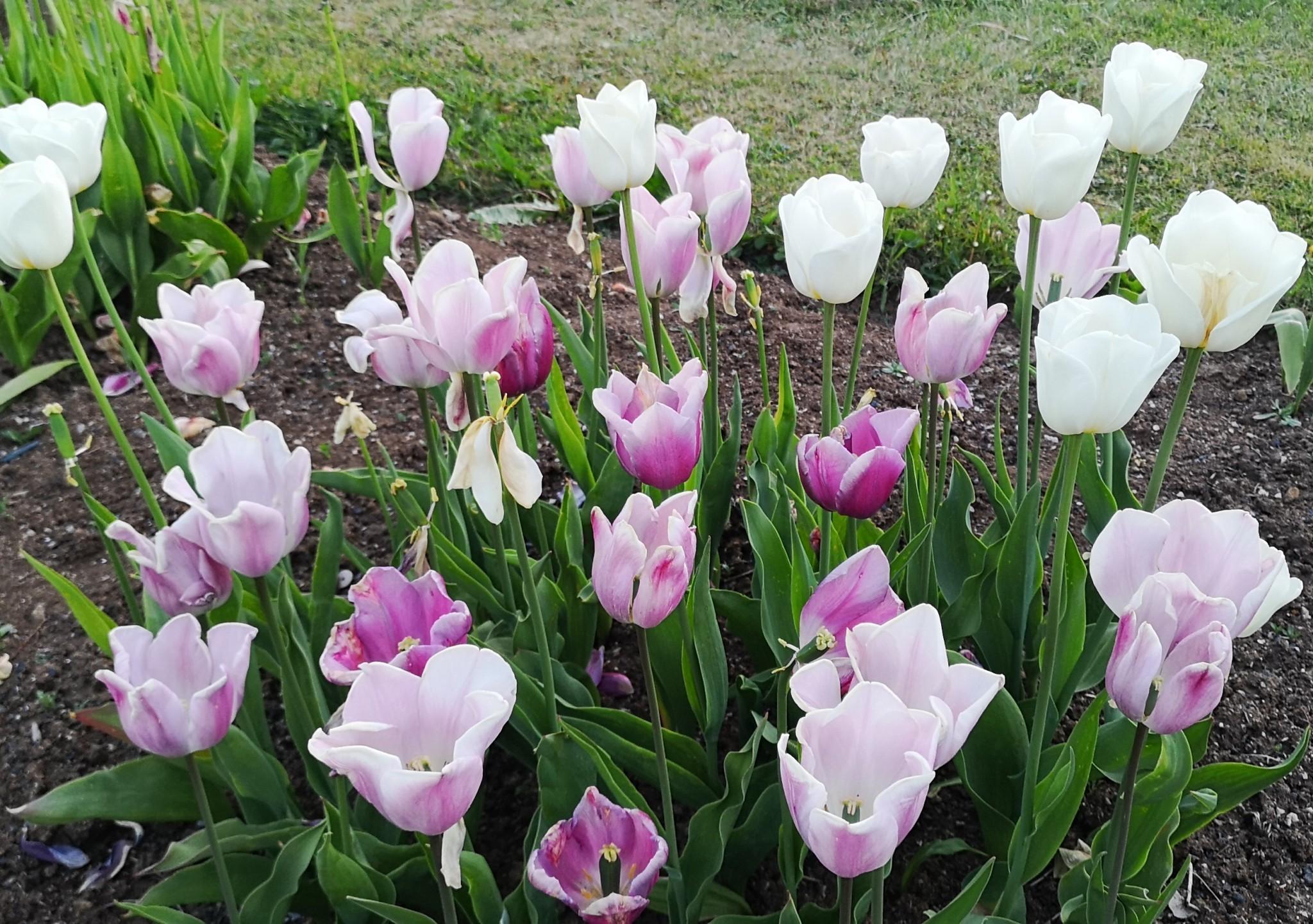 Flower-R-Y1